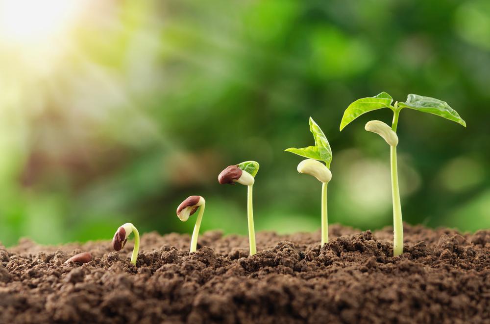 De waarde van groei