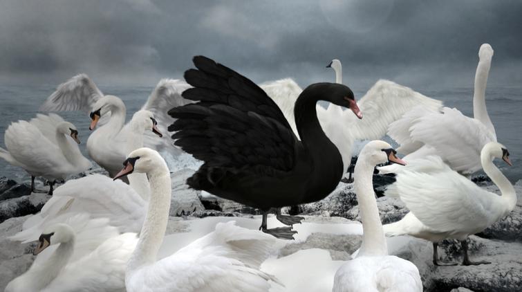 Black Swan explained